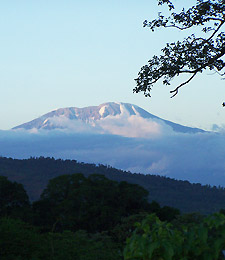 View on the Kilimanjaro